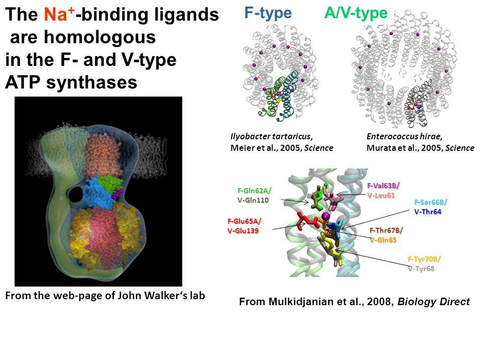 From Mulkidjanian et al., 2008, Biology Direct From the web-page of John Walker's lab F-Glu65A/V-Glu139 F-Gln62A/V-Gln110 F-Val63B/V-Leu61 F-Tyr70B/V-