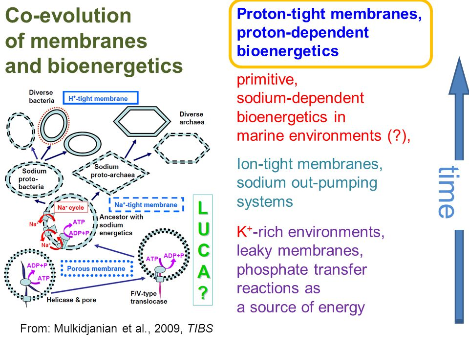 Co-evolution of membranes and bioenergetics time Proton-tight membranes, proton-dependent bioenergetics primitive, sodium-dependent bioenergetics in m