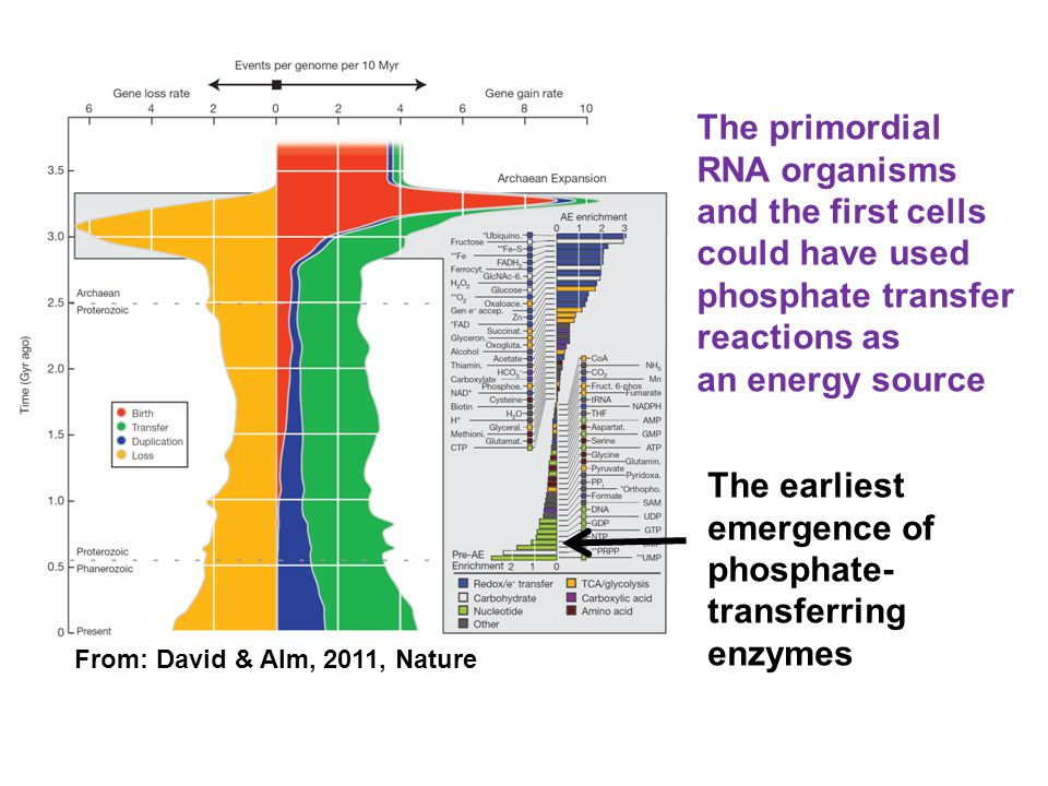 From: David & Alm, 2011, Nature The earliest emergence of phosphate- transferring enzymes The primordial RNA organisms and the first cells could have