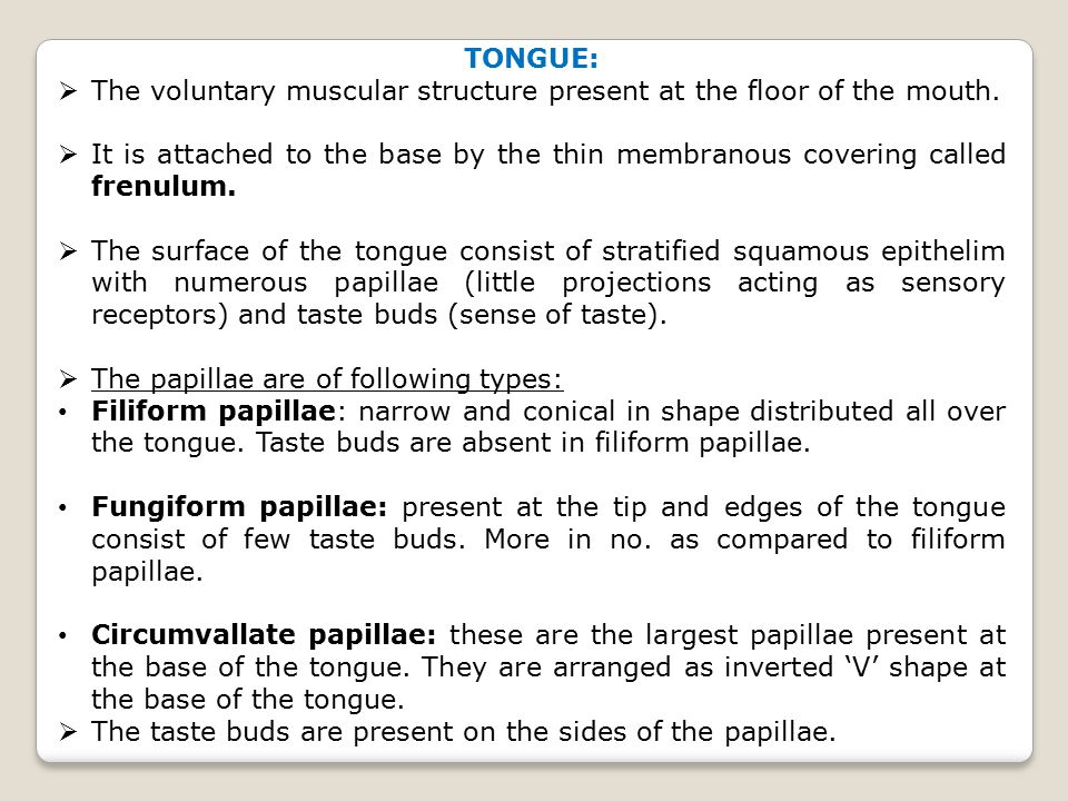 The tongue plays an important role in mastication (chewing), deglutition (swallowing), speech and taste.