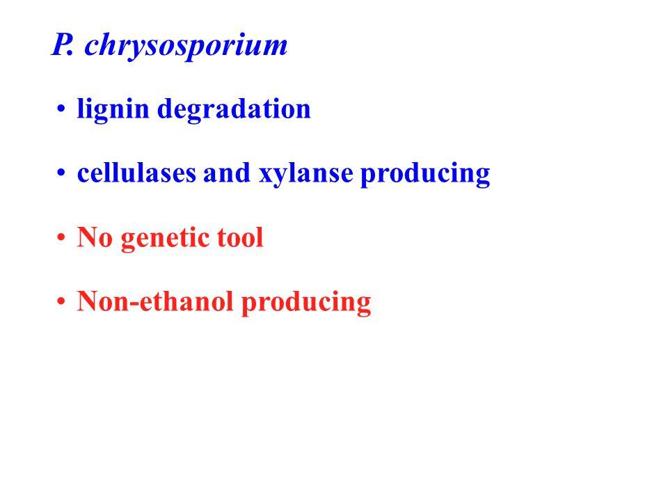 P. chrysosporium lignin degradation cellulases and xylanse producing No genetic tool Non-ethanol producing