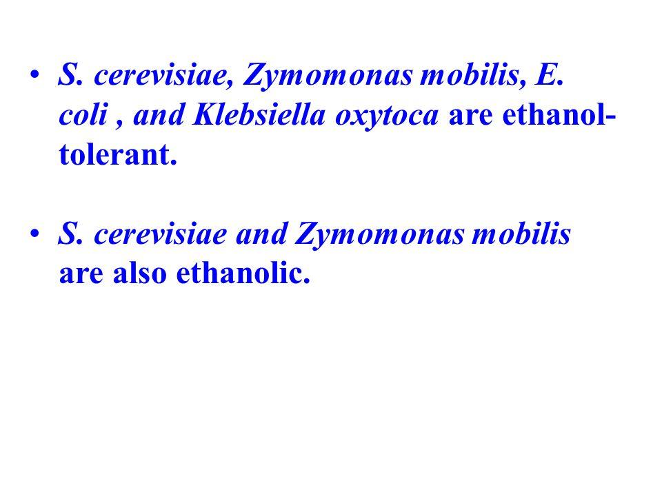 S. cerevisiae, Zymomonas mobilis, E. coli, and Klebsiella oxytoca are ethanol- tolerant. S. cerevisiae and Zymomonas mobilis are also ethanolic.