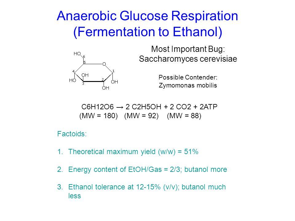 Anaerobic Glucose Respiration (Fermentation to Ethanol) Most Important Bug: Saccharomyces cerevisiae Possible Contender: Zymomonas mobilis C6H12O6 → 2
