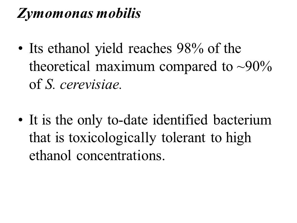 Its ethanol yield reaches 98% of the theoretical maximum compared to ~90% of S. cerevisiae. It is the only to-date identified bacterium that is toxico