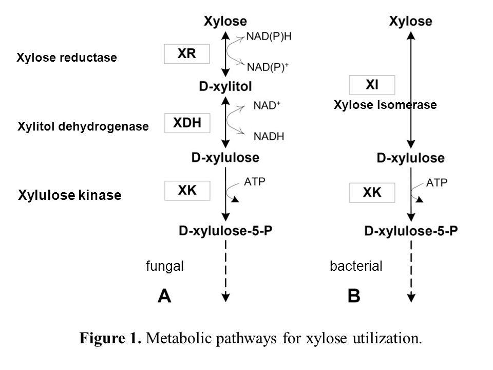 Xylose reductase Xylitol dehydrogenase Xylulose kinase Xylose isomerase Figure 1. Metabolic pathways for xylose utilization. fungalbacterial