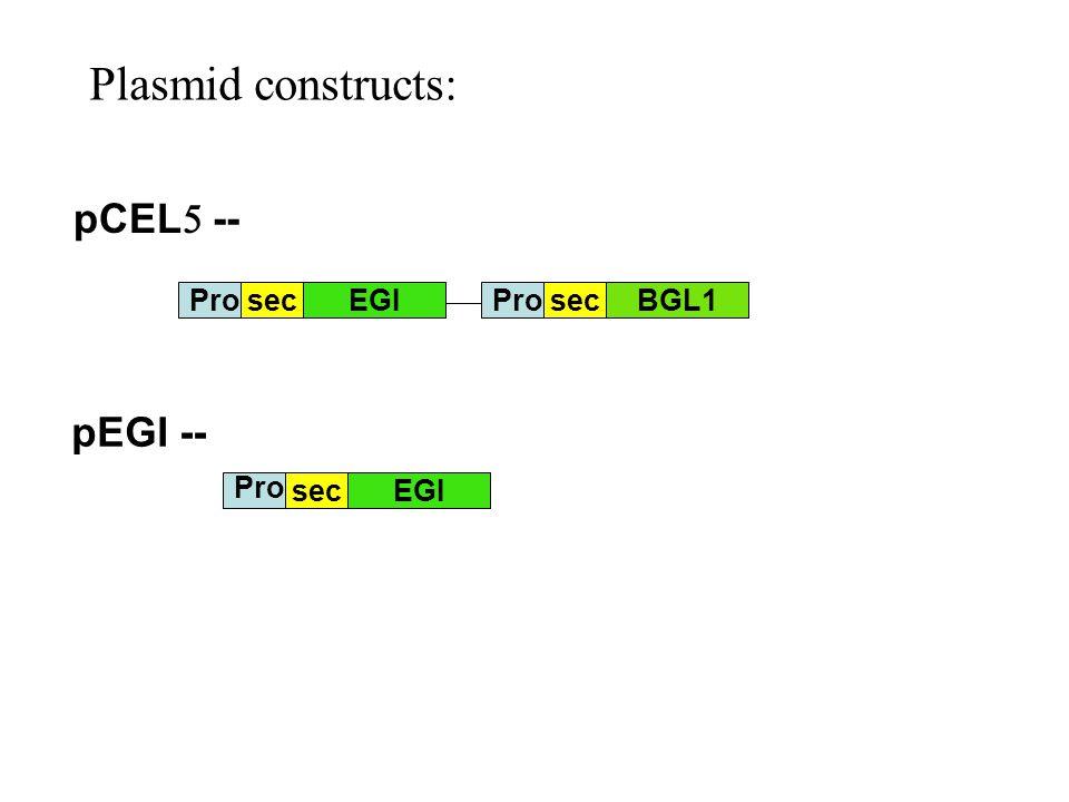 Plasmid constructs: pCEL  -- pEGI -- secEGIBGL1 Pro sec EGI Pro