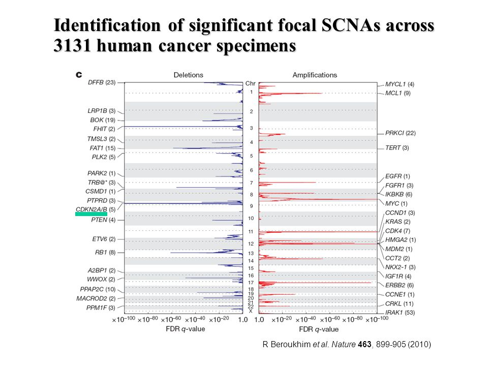 R Beroukhim et al. Nature 463, 899-905 (2010) Identification of significant focal SCNAs across 3131 human cancer specimens