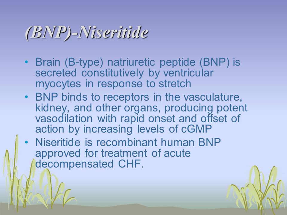 (BNP)-Niseritide Brain (B-type) natriuretic peptide (BNP) is secreted constitutively by ventricular myocytes in response to stretch BNP binds to receptors in the vasculature, kidney, and other organs, producing potent vasodilation with rapid onset and offset of action by increasing levels of cGMP Niseritide is recombinant human BNP approved for treatment of acute decompensated CHF.