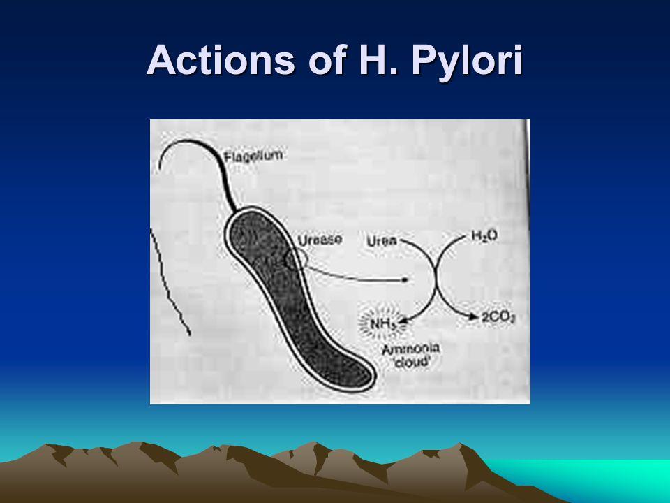Actions of H. Pylori