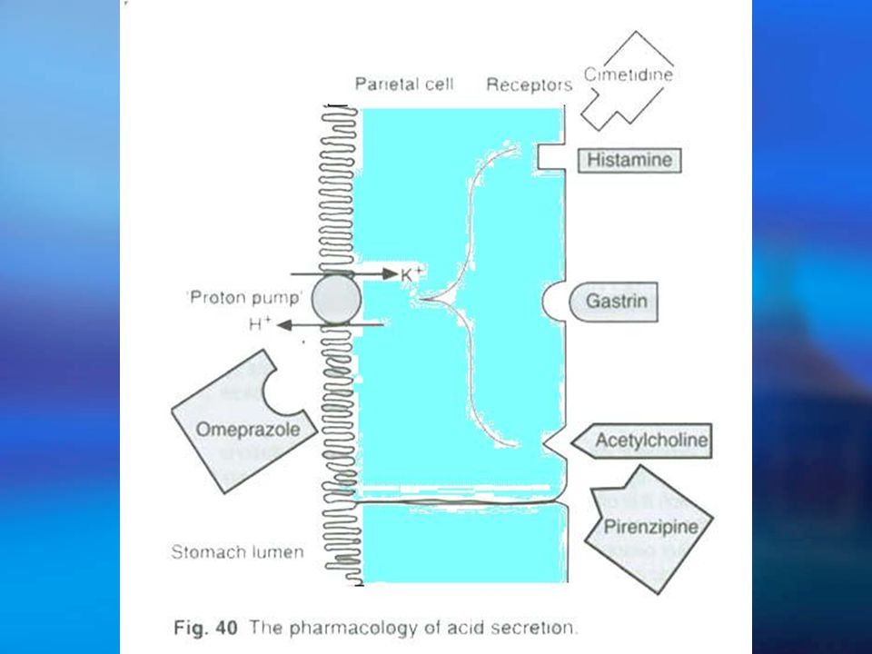 Ⅱ.2. Proton Pump Inhibitors  Mechanism: H +,K + -ATPase H + K +  Pharmacologic Effects: HCl & Hp  Agents: Omeprazole ( losec ) Lansoprazole Pantopr