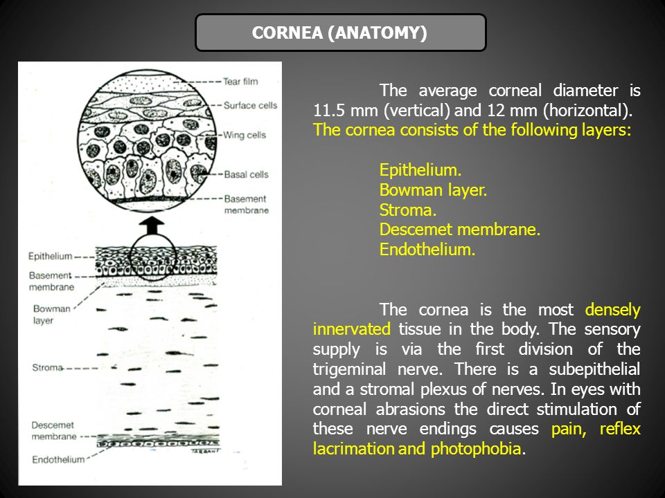 The average corneal diameter is 11.5 mm (vertical) and 12 mm (horizontal). The cornea consists of the following layers: Epithelium. Bowman layer. Stro