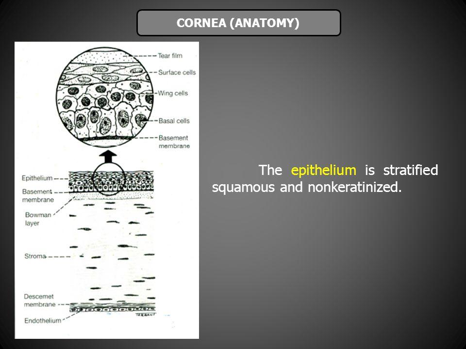 The epithelium is stratified squamous and nonkeratinized. CORNEA (ANATOMY)