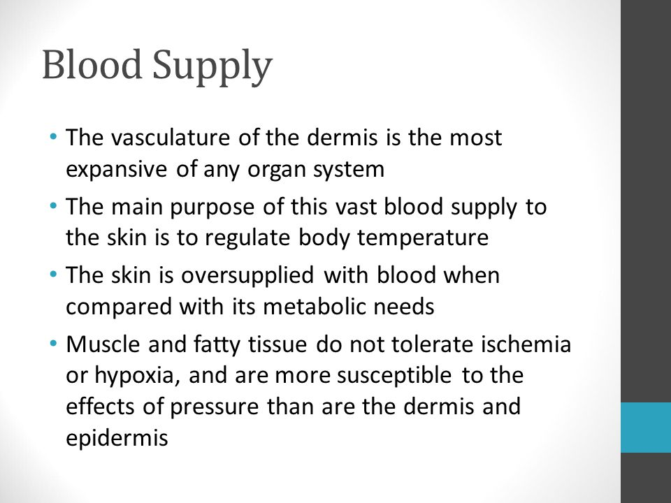 Blood Supply The vasculature of the dermis is the most expansive of any organ system The main purpose of this vast blood supply to the skin is to regu