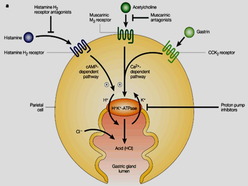 Misoprostol  Prostaglandin analogues (PGE1 )   HCL secretion.