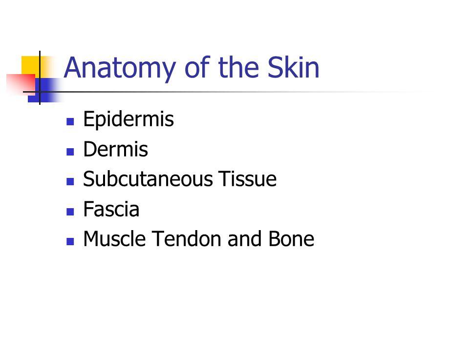 Anatomy of the Skin Epidermis Dermis Subcutaneous Tissue Fascia Muscle Tendon and Bone