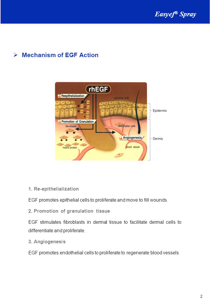  Mechanism of EGF Action 1.