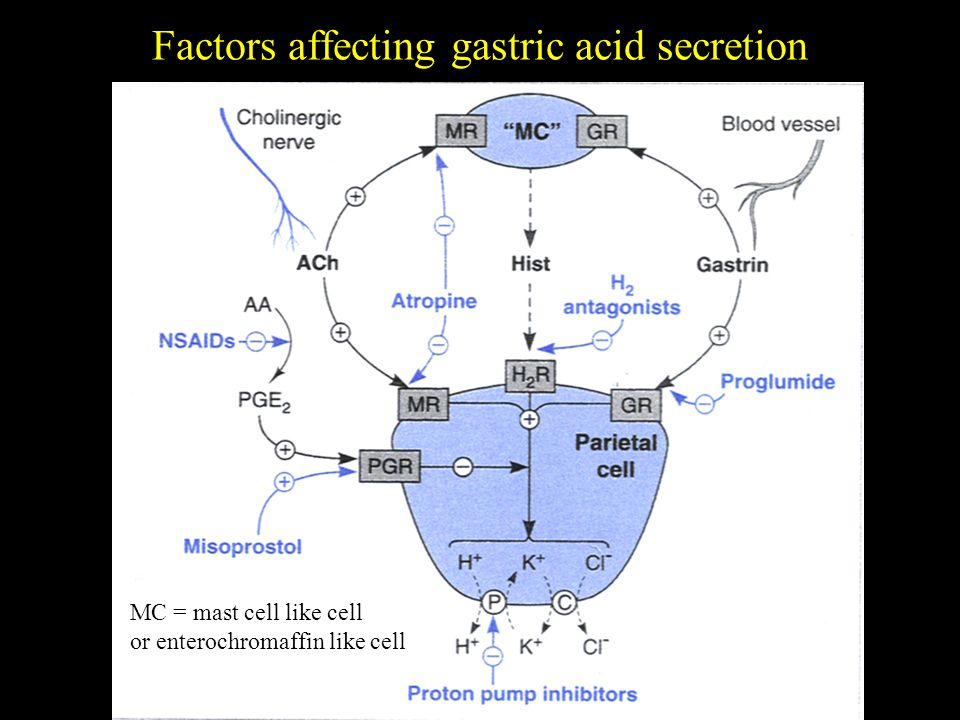 Factors affecting gastric acid secretion MC = mast cell like cell or enterochromaffin like cell