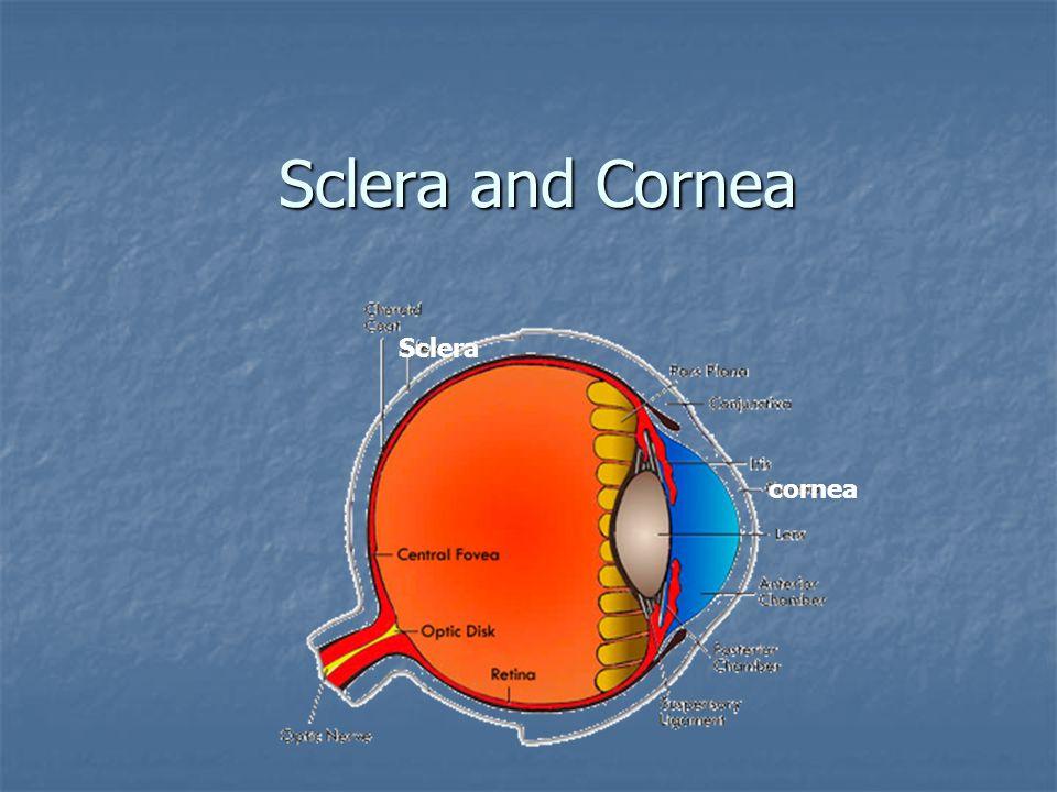 Sclera and Cornea cornea Sclera