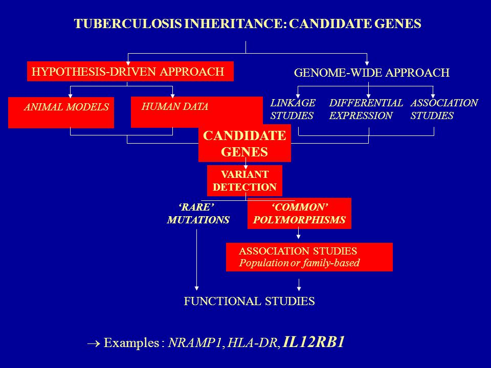 HYPOTHESIS-DRIVEN APPROACH TUBERCULOSIS INHERITANCE: CANDIDATE GENES ASSOCIATION STUDIES Population or family-based VARIANT DETECTION FUNCTIONAL STUDIES 'COMMON' POLYMORPHISMS 'RARE' MUTATIONS GENOME-WIDE APPROACH ASSOCIATION STUDIES DIFFERENTIAL EXPRESSION CANDIDATE GENES ANIMAL MODELS HUMAN DATA LINKAGE STUDIES  Examples : NRAMP1, HLA-DR, IL12RB1