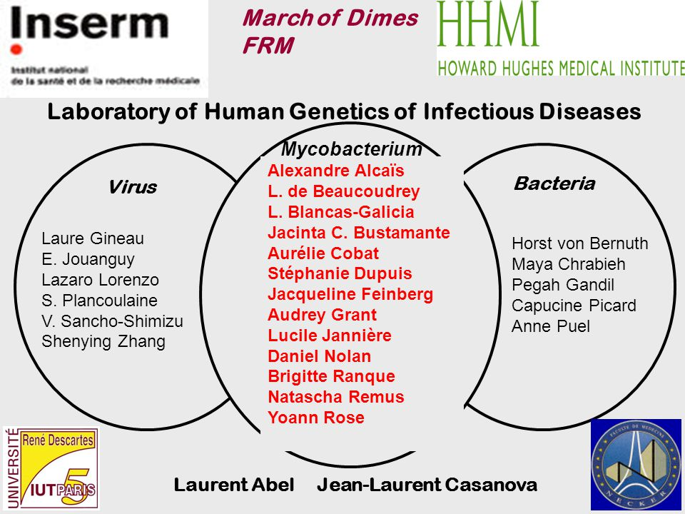 Laboratory of Human Genetics of Infectious Diseases Bacteria Virus Laure Gineau E.