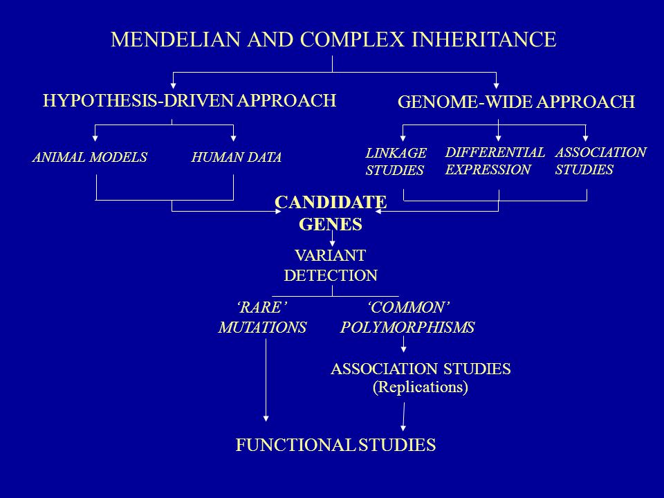 MENDELIAN SUSCEPTIBILITY TO MYCOBACTERIAL DISEASES (MSMD) Disseminated infections by environmental mycobacteria (EM), BCG No known primary or acquired immunodeficiency Very rare (10 -5 – 10 -6 ) but often familial (consanguinity) Mendelian transmission (7 identified genes so far)