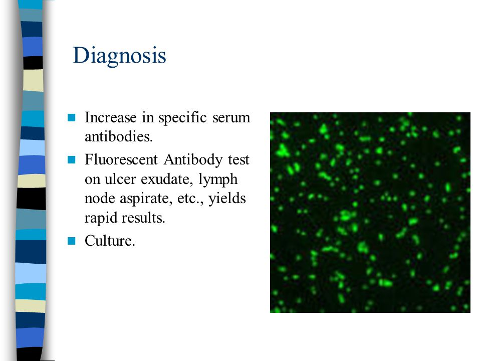 Diagnosis Increase in specific serum antibodies. Fluorescent Antibody test on ulcer exudate, lymph node aspirate, etc., yields rapid results. Culture.