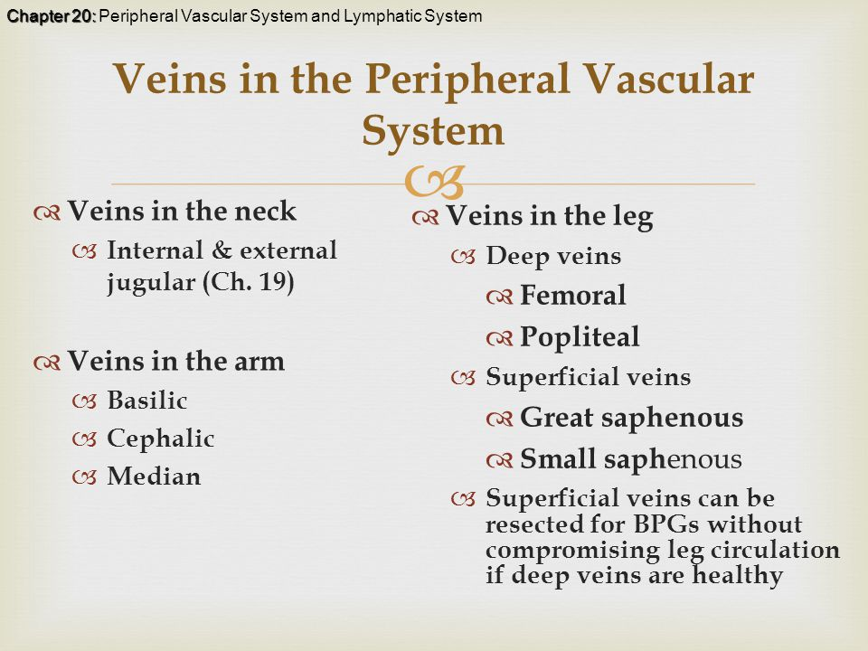 Chapter 20: Chapter 20: Peripheral Vascular System and Lymphatic System  Veins in the Peripheral Vascular System  Veins in the neck  Internal & external jugular (Ch.