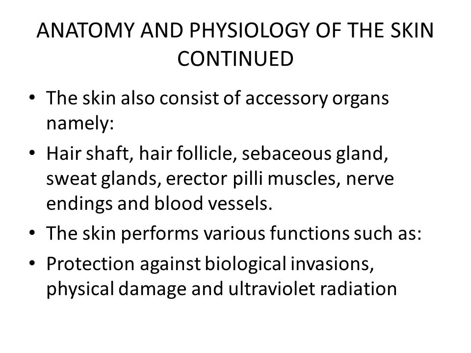 ANATOMY AND PHYSIOLOGY OF THE SKIN CONTINUED Provision of sensation by the nerve endings for touch pain and heat.