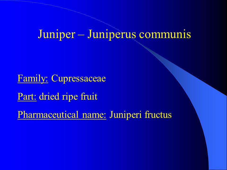 Family: Cupressaceae Part: dried ripe fruit Pharmaceutical name: Juniperi fructus