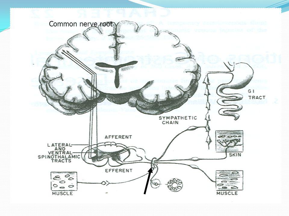 Common nerve root