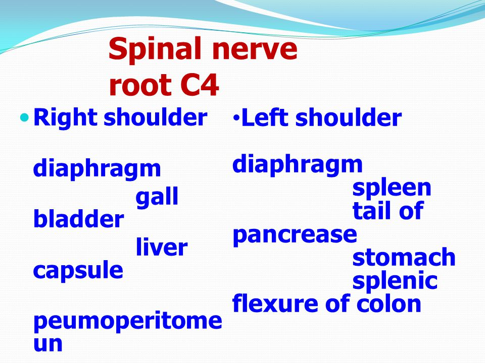 Spinal nerve root C4 Right shoulder diaphragm gall bladder liver capsule peumoperitome un Left shoulder diaphragm spleen tail of pancrease stomach spl