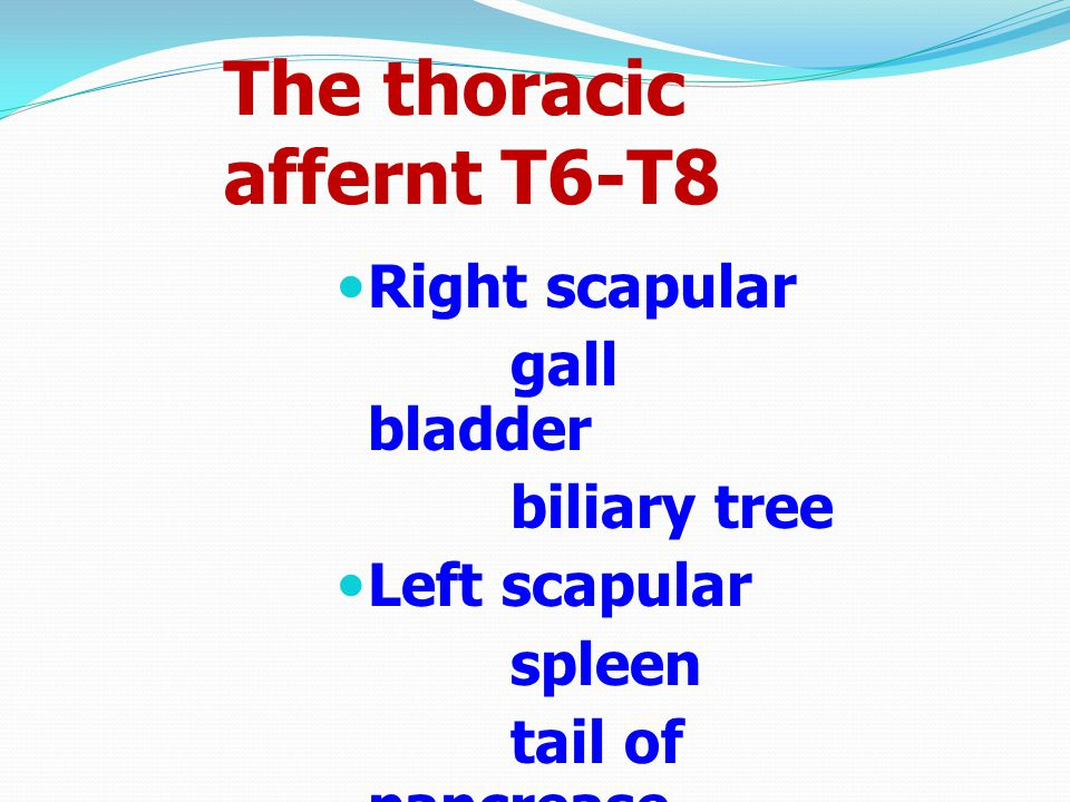 The thoracic affernt T6-T8 Right scapular gall bladder biliary tree Left scapular spleen tail of pancrease