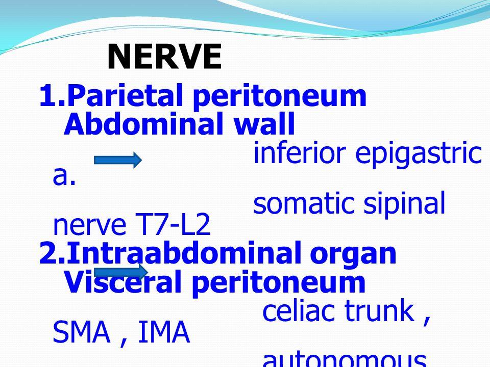 NERVE 1.Parietal peritoneum Abdominal wall inferior epigastric a.