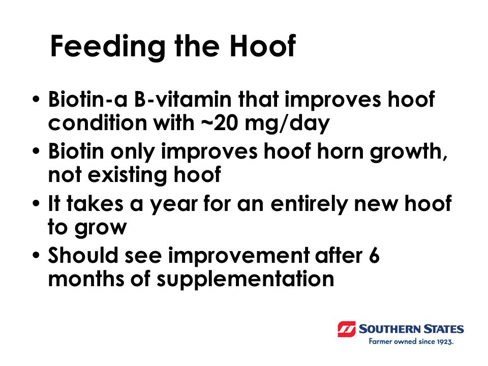 Biotin-a B-vitamin that improves hoof condition with ~20 mg/day Biotin only improves hoof horn growth, not existing hoof It takes a year for an entirely new hoof to grow Should see improvement after 6 months of supplementation Feeding the Hoof