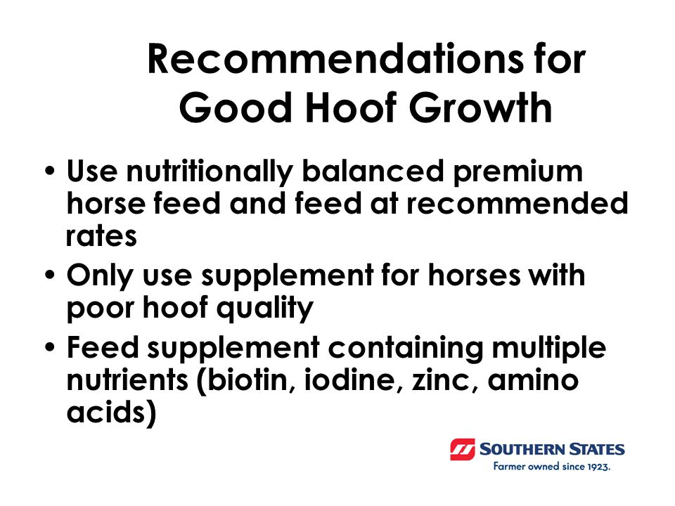 Recommendations for Good Hoof Growth Use nutritionally balanced premium horse feed and feed at recommended rates Only use supplement for horses with poor hoof quality Feed supplement containing multiple nutrients (biotin, iodine, zinc, amino acids)