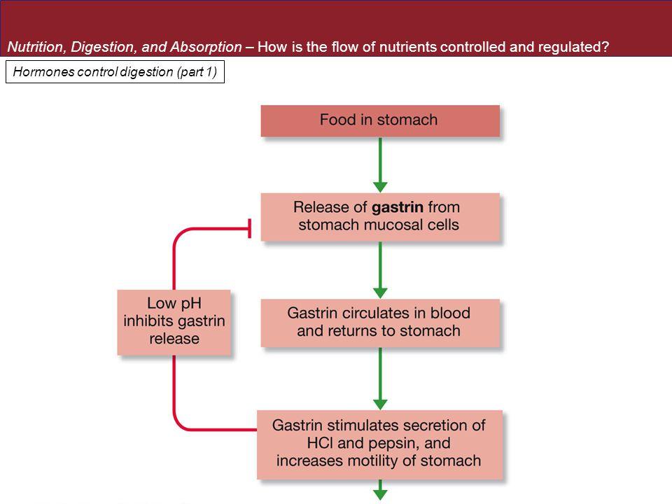 Hormones control digestion (part 1)