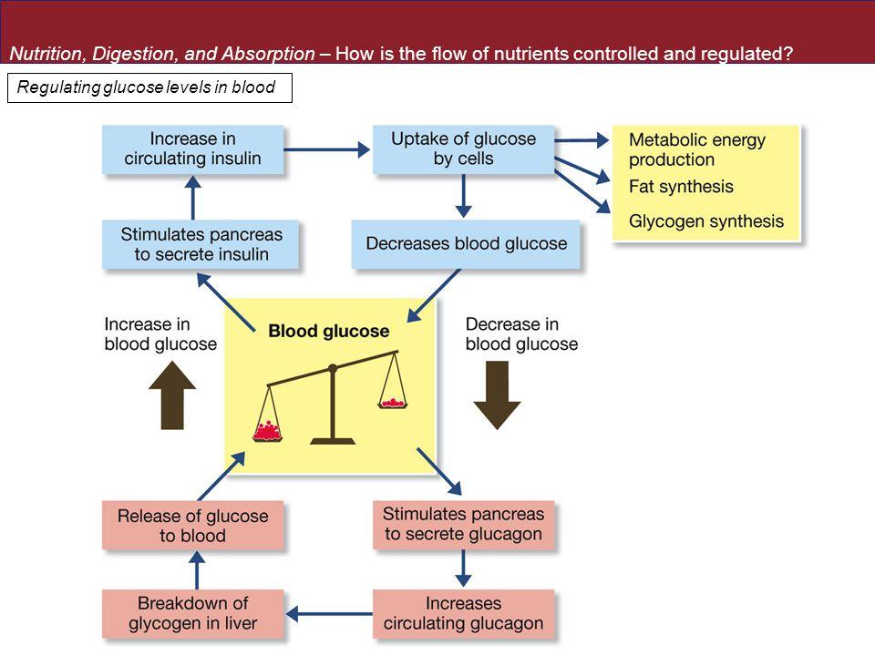 Regulating glucose levels in blood