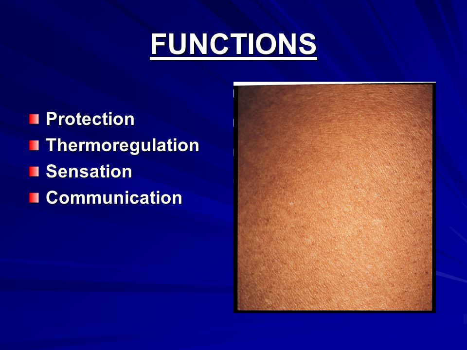 FUNCTIONS ProtectionThermoregulationSensationCommunication