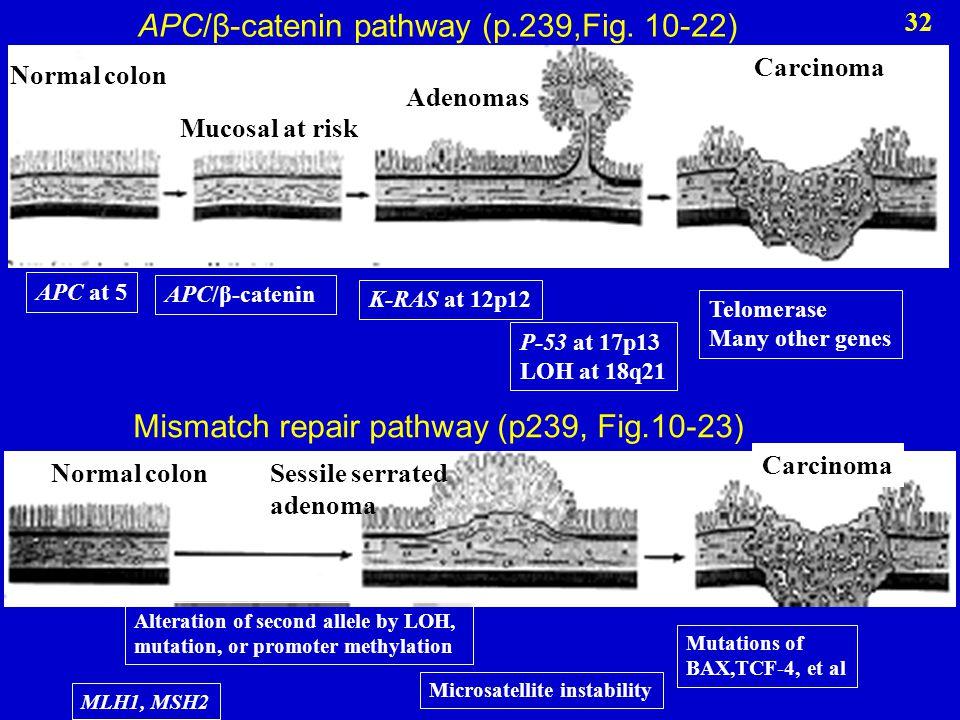 Mismatch repair pathway (p239, Fig.10-23) APC/β-catenin pathway (p.239,Fig. 10-22) Normal colon Adenomas Carcinoma Mucosal at risk APC at 5 APC/β-cate