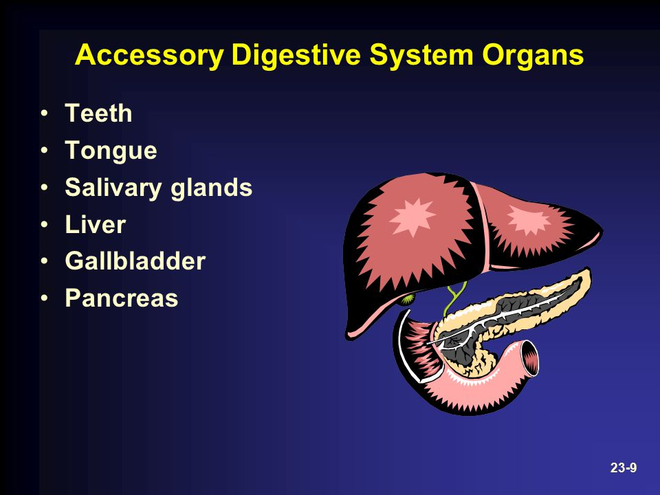 Accessory Digestive System Organs Teeth Tongue Salivary glands Liver Gallbladder Pancreas 23-9
