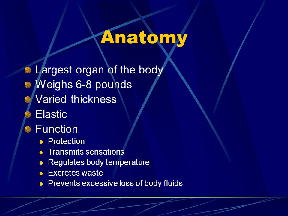 Anatomy Largest organ of the body Weighs 6-8 pounds Varied thickness Elastic Function Protection Transmits sensations Regulates body temperature Excre