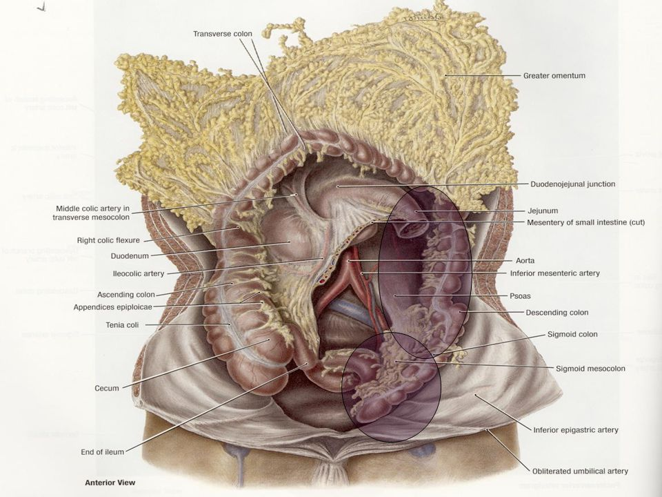 Infection of the intestinal tract Malabsorption syndrome Abnormal absorption Types Gluten - protein in grains Tropical – caused by bacteria