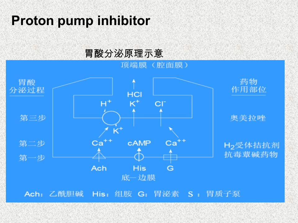 Proton pump inhibitor 胃酸分泌原理示意