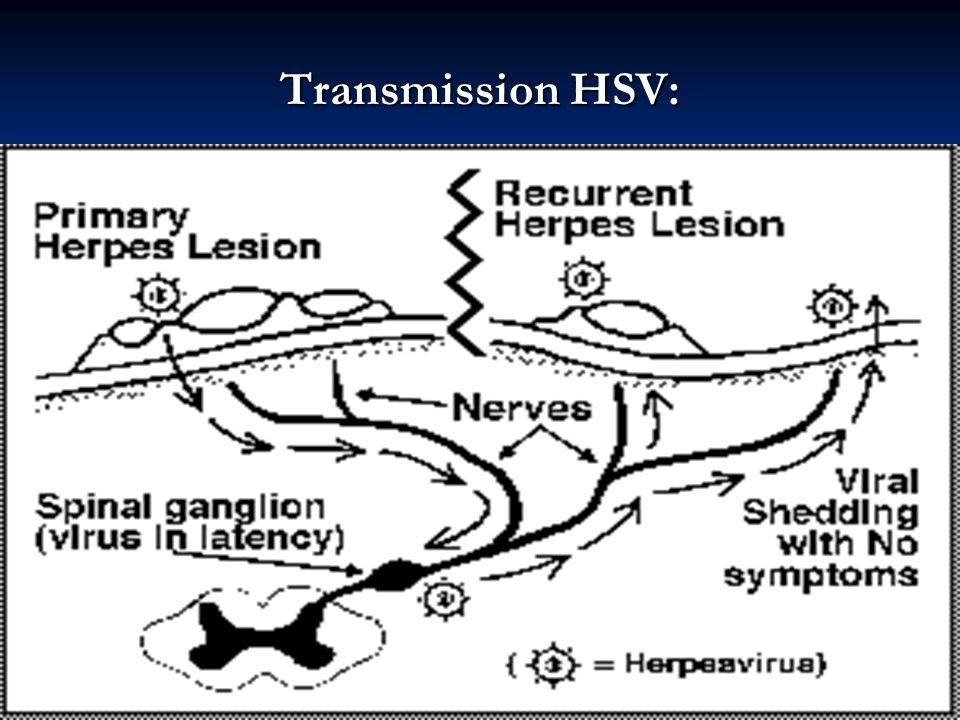 Transmission HSV:
