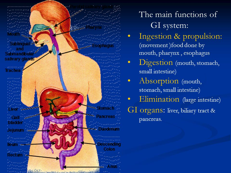 The main functions of GI system: Ingestion & propulsion: (movement )food done by mouth, pharynx, esophagus Digestion (mouth, stomach, small intestine)