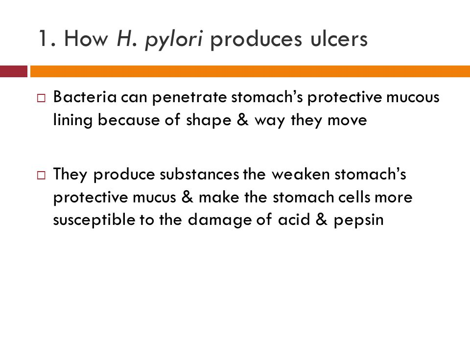 1. How H. pylori produces ulcers  Bacteria can penetrate stomach's protective mucous lining because of shape & way they move  They produce substance