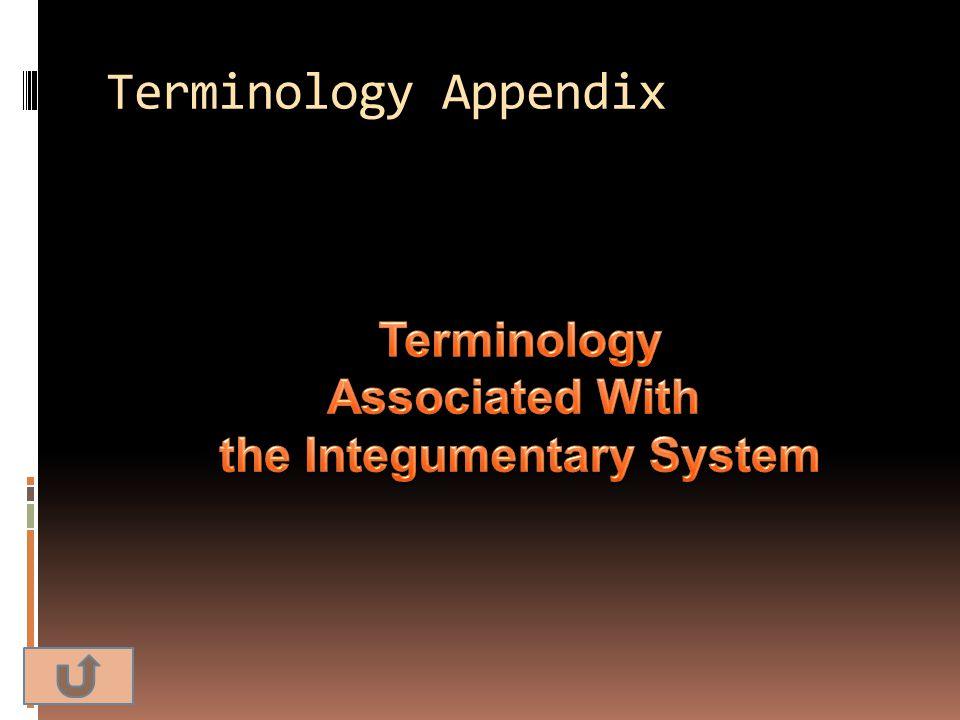 Terminology Appendix