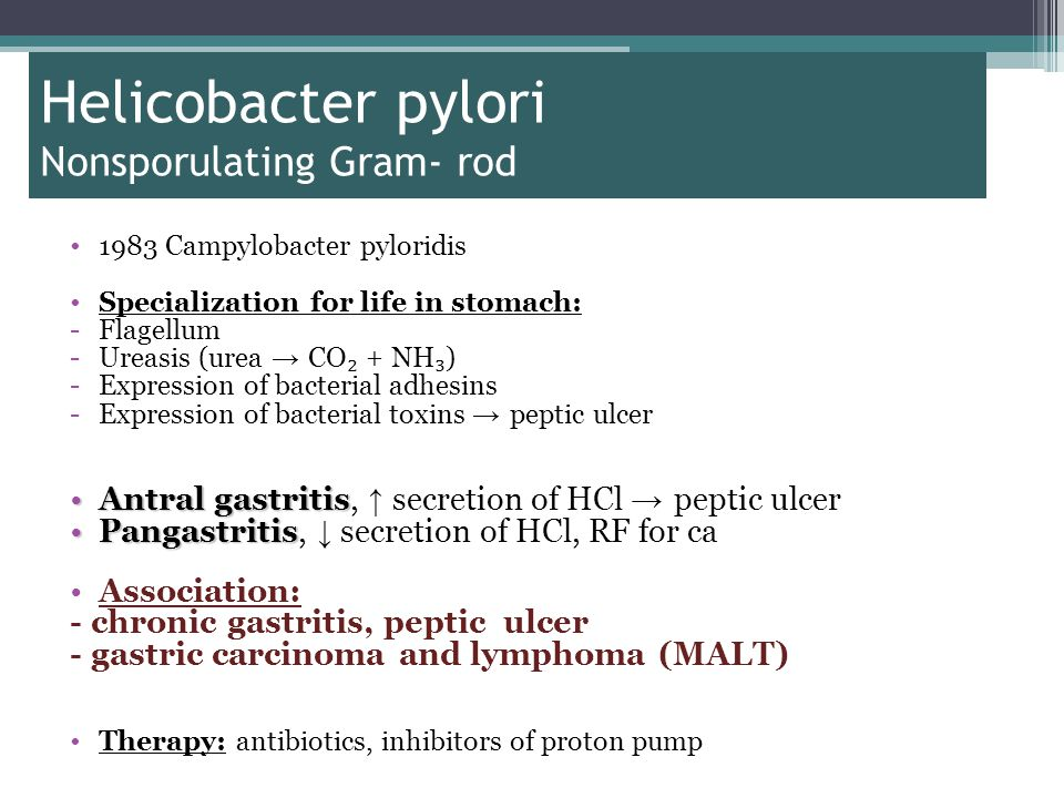 Helicobacter pylori Nonsporulating Gram- rod 1983 Campylobacter pyloridis Specialization for life in stomach: -Flagellum -Ureasis (urea → CO ₂ + NH ₃ ) -Expression of bacterial adhesins -Expression of bacterial toxins → peptic ulcer Antral gastritisAntral gastritis, ↑ secretion of HCl → peptic ulcer PangastritisPangastritis, ↓ secretion of HCl, RF for ca Association: - chronic gastritis, peptic ulcer - gastric carcinoma and lymphoma (MALT) Therapy: antibiotics, inhibitors of proton pump