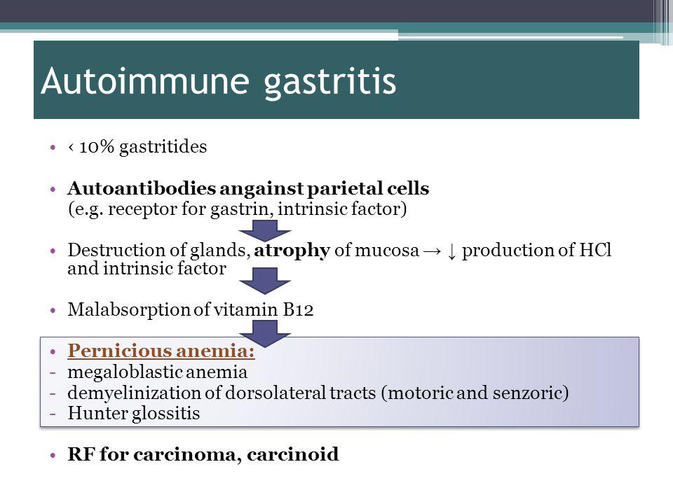 Autoimmune gastritis ‹ 10% gastritides Autoantibodies angainst parietal cells (e.g.