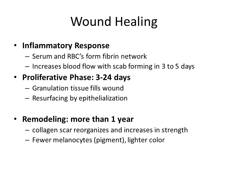 Wound Healing Inflammatory Response – Serum and RBC's form fibrin network – Increases blood flow with scab forming in 3 to 5 days Proliferative Phase: